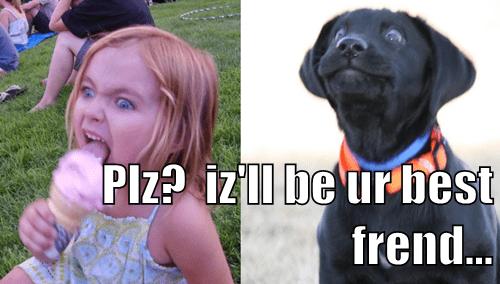 icecream,dogs