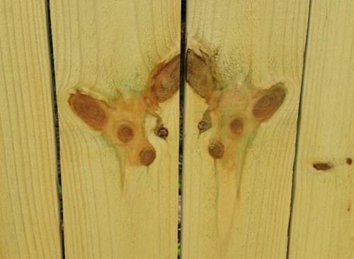 dogs,wood,weird