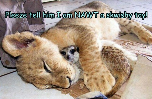 Pleeze tell him I am NAWT a skwishy toy!