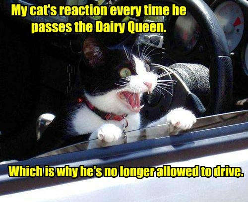 My cat's reaction every time he passes the Dairy Queen.
