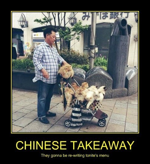 dogs,chinese food,funny