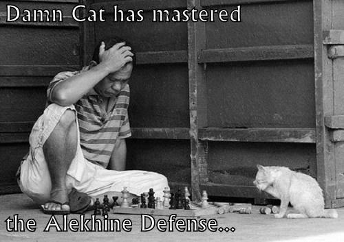 Damn Cat has mastered  the Alekhine Defense...