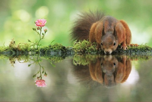 Squirrels and Flowers Both Need a Sip