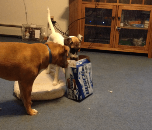 What Do You Mean You Drank All the Beer?