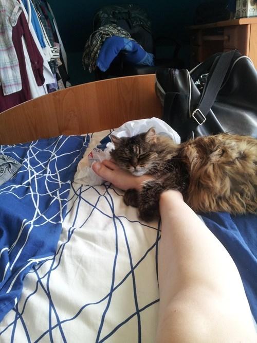 Looks Like Another Foot-Obsessed Feline