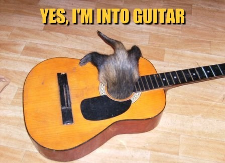 Kitten stuck in an acoustic guitar, caption:
