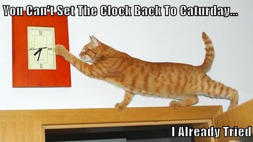 You Can't Set The Clock Back To Caturday...  I Already Tried