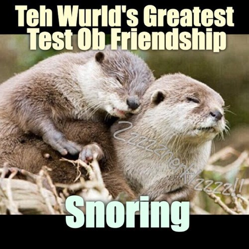 friendship,otters,snoring