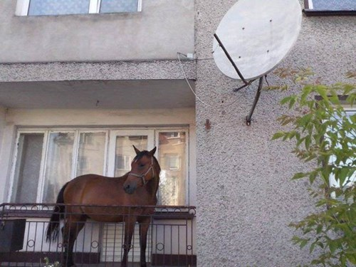 Anybody Remember Where I Put My Horse?