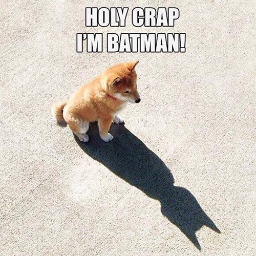 batman,dogs,funny,shadows