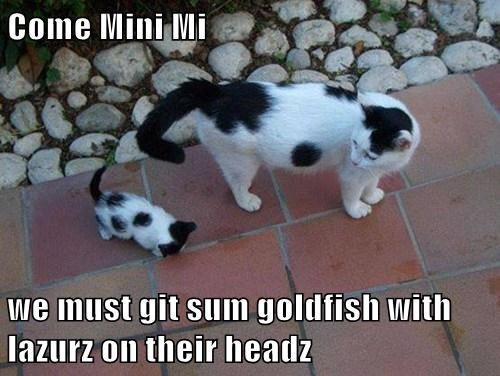 Come Mini Mi  we must git sum goldfish with lazurz on their headz