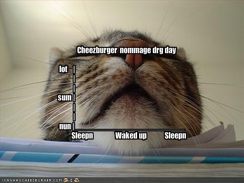 Cheezburger  nommage drg day