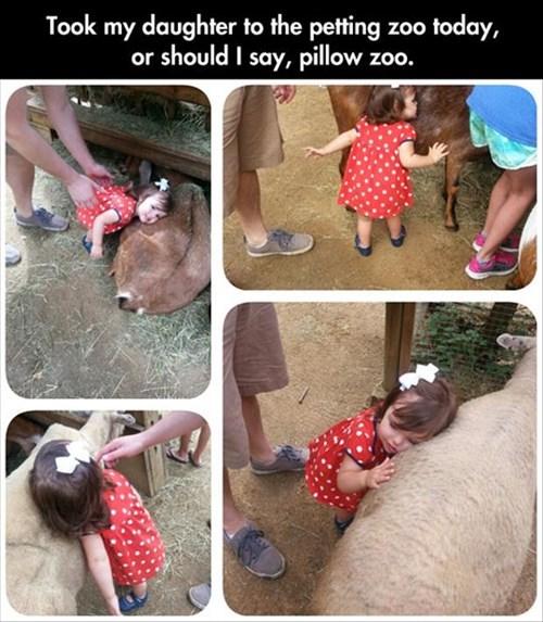 animals,petting zoo,so cute