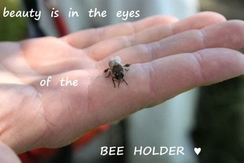 beauty  is  in  the  eyes          of  the             BEE  HOLDER  ♥
