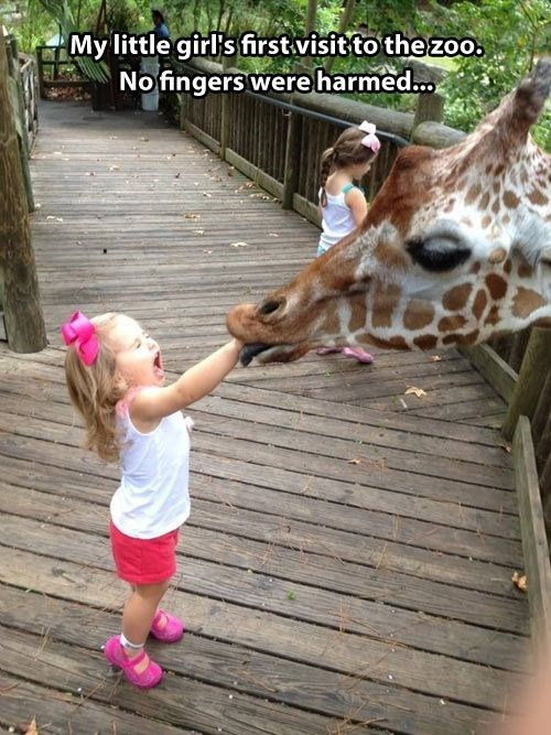 Never Feed a Giraffe a Cheerio