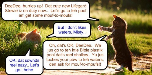 At Kamp Kuppykakes, as word gets around about Stewie, teh new Lifeguard, girl kitties ar anxious to take a looks.. (an' get som ob dat mouf-to-mouf resuscitations!)