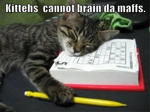 Kittehs  cannot brain da maffs.