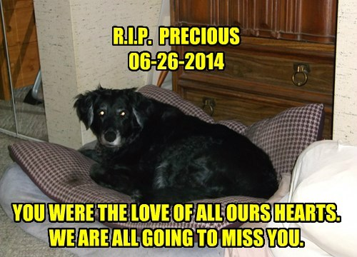 R.I.P.  PRECIOUS  06-26-2014      YOU WERE THE LOVE OF ALL OURS HEARTS.  WE ARE ALL GOING TO MISS YOU.