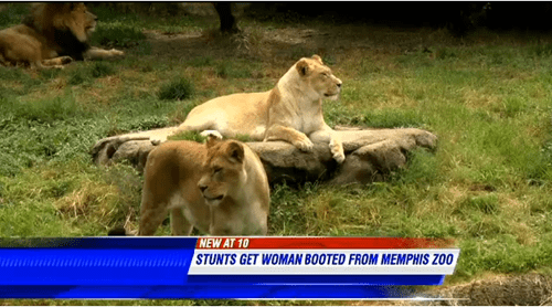 One Woman Was Determined to Jump Into the Lion's Den for the Worst Possible Reason