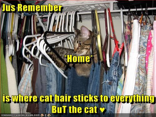 Jus Remember *Home* is where cat hair sticks to everything BuT the cat ♥