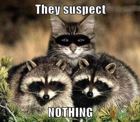 Cats,disguise,raccoons