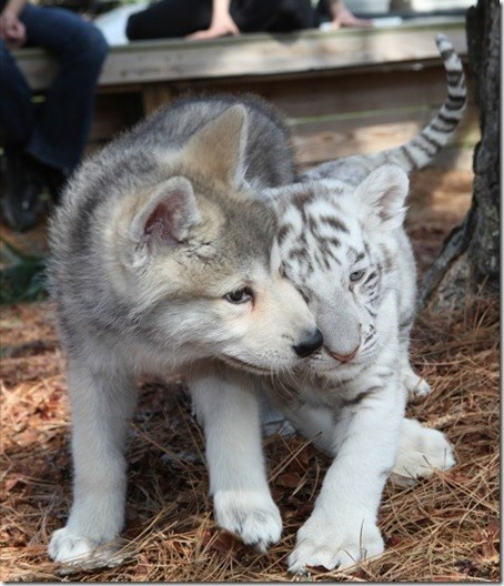 Best Friends: They're GRRREAT!