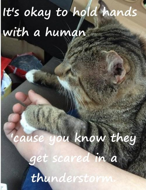 It's okay to hold hands with a human  'cause you know they get scared in a thunderstorm.