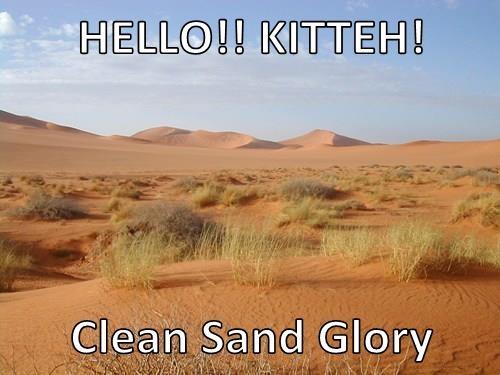 HELLO!! KITTEH!  Clean Sand Glory