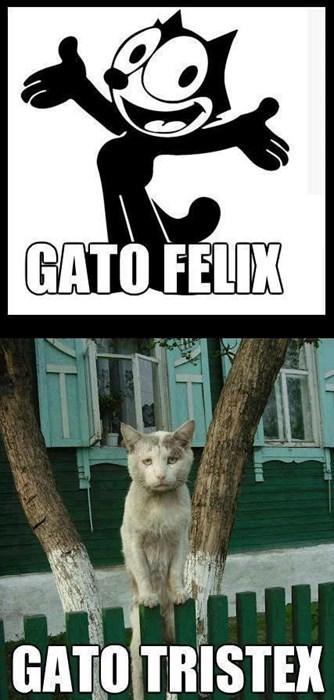 Uno de gatos