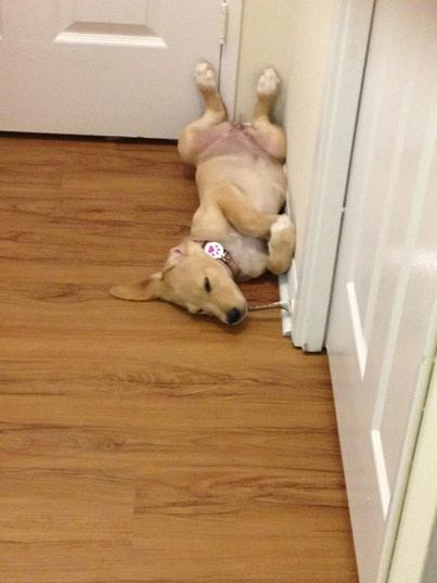 dogs,tired,sleeping
