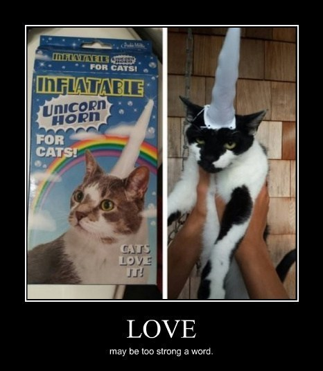 Cats,horn,unicorn,love