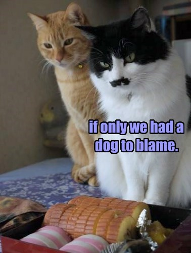 if only we had a dog to blame.