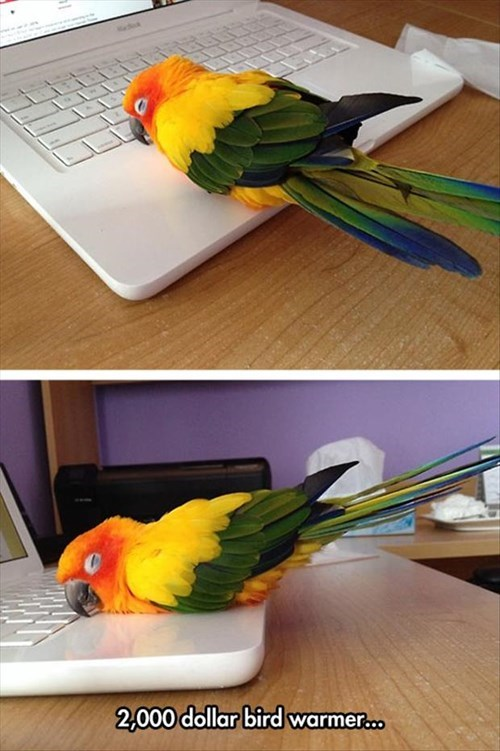 cute,birds,computer,warmer,sleeping