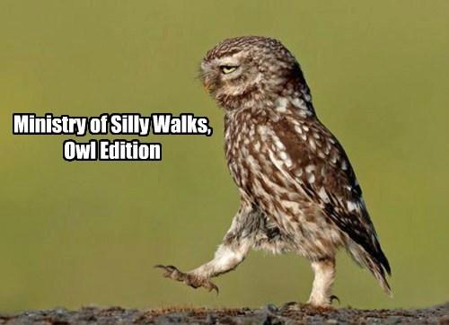 monty python,funny,owls
