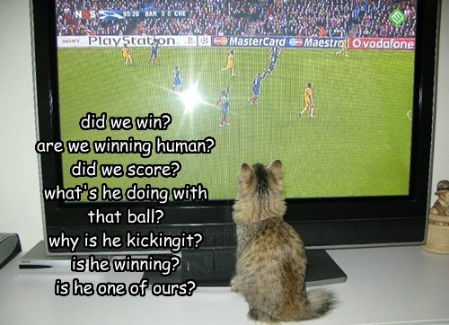 did we win? are we winning human? did we score? what's he doing with  that ball? why is he kickingit? is he winning?  is he one of ours?