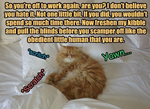 So you're off to work again, are you? I don't believe you hate it. Not one little bit. If you did, you wouldn't spend so much time there. Now freshen my kibble and pull the blinds before you scamper off like the obedient little human that you are.