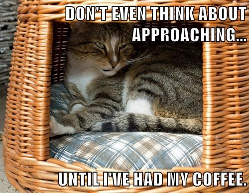DON'T EVEN THINK ABOUT APPROACHING...  UNTIL I'VE HAD MY COFFEE.