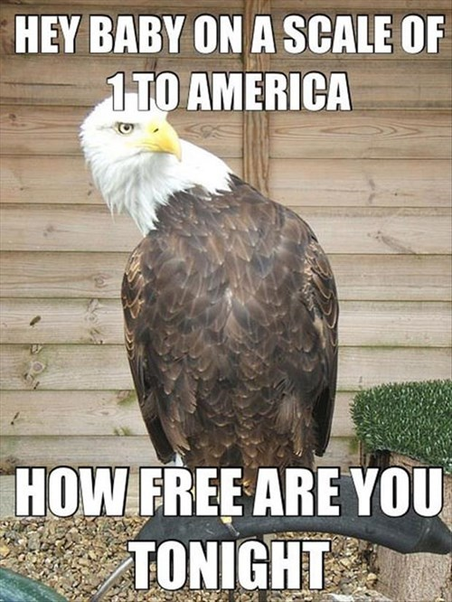 fourth of july,eagles,funny,pickup lines