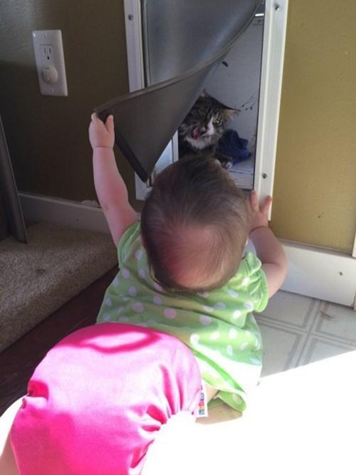 cat door,peekaboo,baby,parenting,Cats