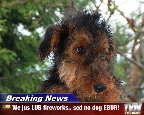 Breaking News - We jus LUB fireworks.. sed no dog EBUR!