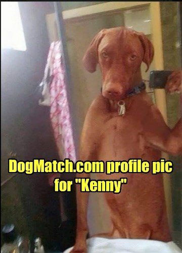 "DogMatch.com profile pic for ""Kenny"""