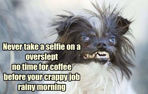 dogs,work sucks,selfie