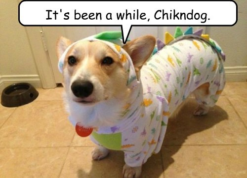 It's been a while, Chikndog.