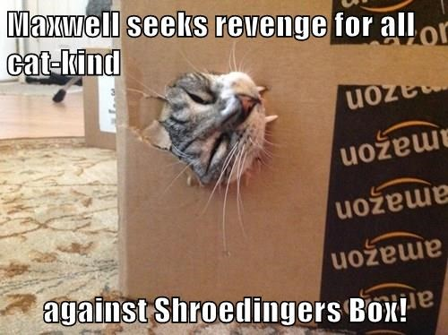 Maxwell seeks revenge for all cat-kind  against Shroedingers Box!