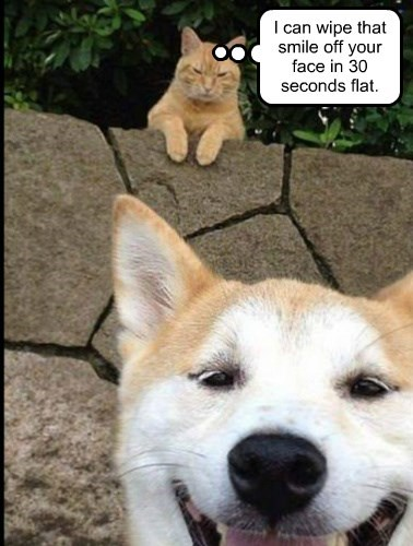 cat,dogs,wipe,caption,away,smile