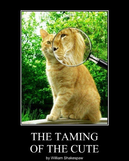 THE TAMING OF THE CUTE