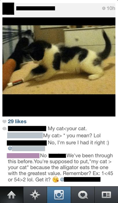 Cats,facepalm,pets,math,school