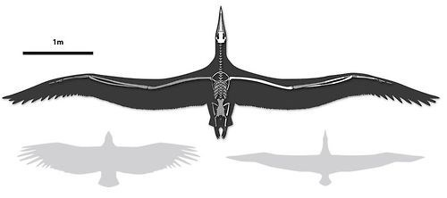 Ancient Seabird Had a 21 Foot Wingspan