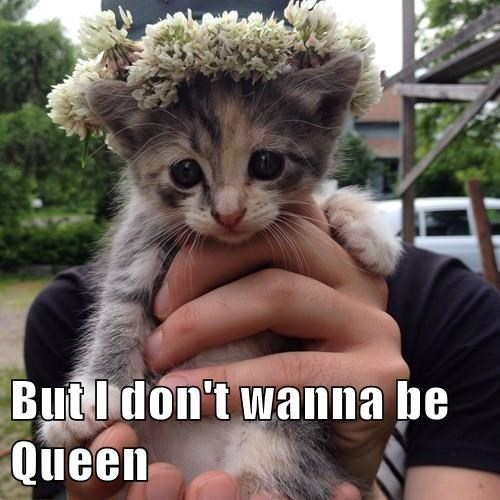 But I don't wanna be Queen