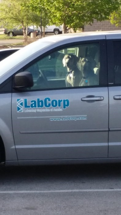 "I Bet You Thought It Stood for ""Laboratory Corp"""